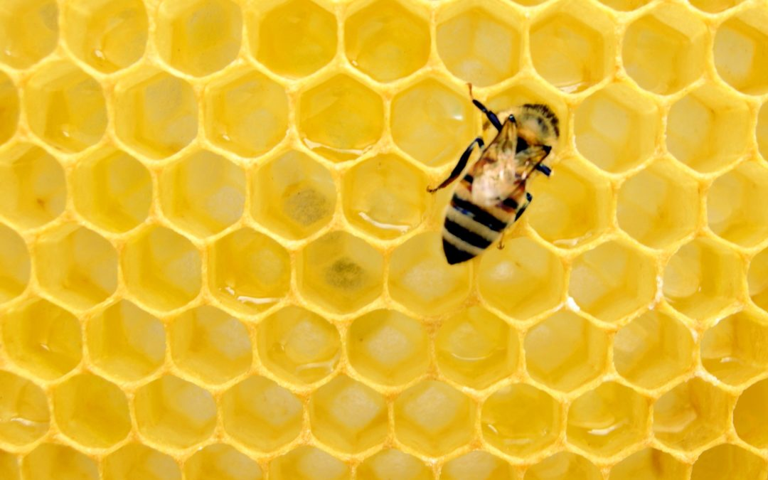 Overcoming Covid-19: Three Things We Can Learn From The HoneyBee
